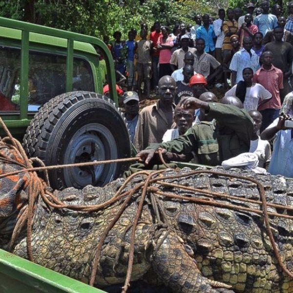 GTY_kakira_uganda_crocodile_jt_140406_16x9_992